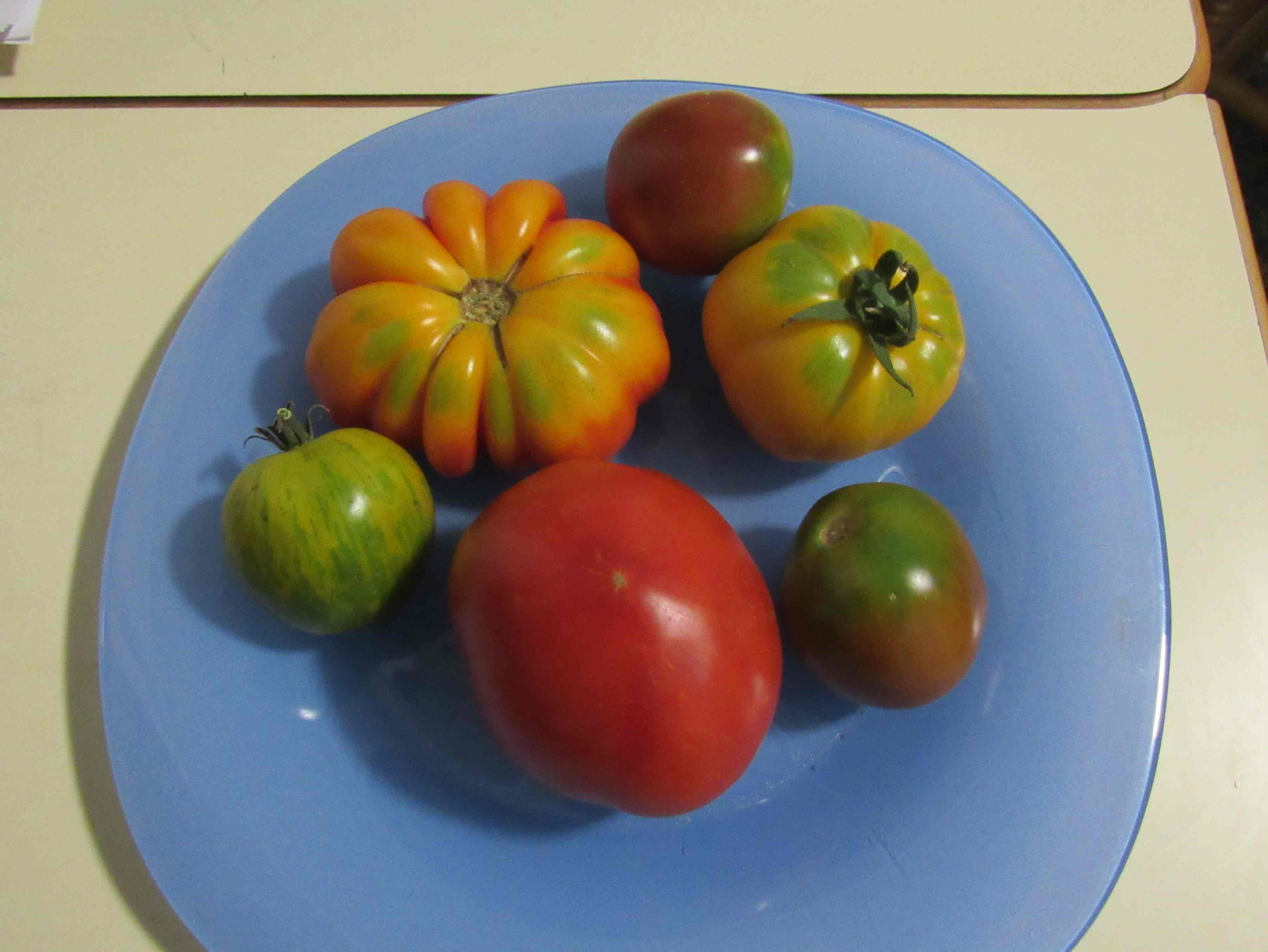 colorful tomatoes 2019