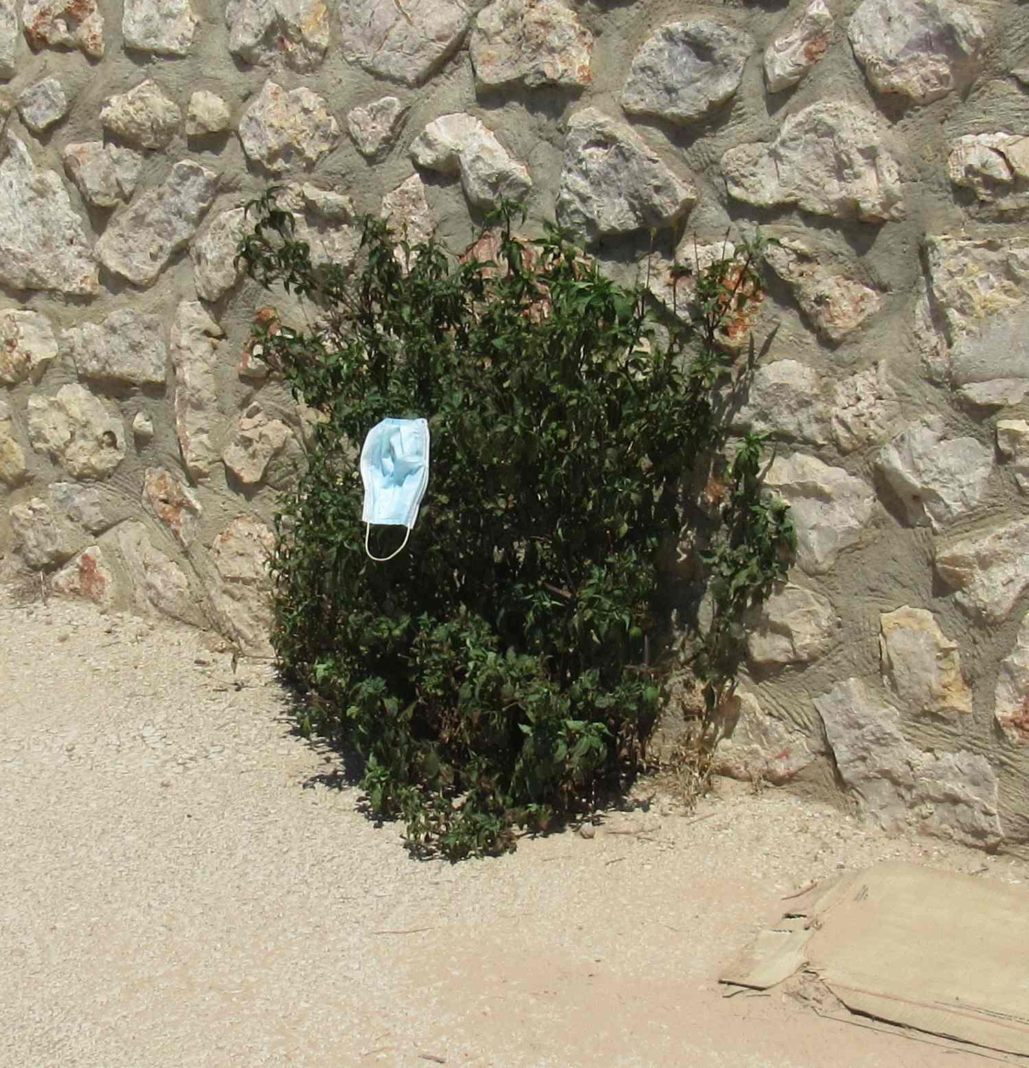 planta de la mascarilla
